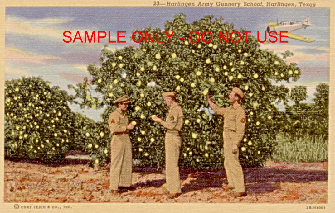 WW2 Picking Oranges in TX